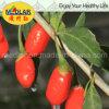 Cuidado médico de Wolfberry de la baya de Goji de la especialidad del níspero
