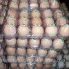 明確なプラスチックは皿の包装に卵を投げつける