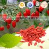 Het natuurlijke KruidenFruit van Barbarije Wolfberry van de Grondstof van de Installatie