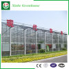 Landbouw/het Commerciële Groene Huis van de Tuin van het Glas voor Bloemen