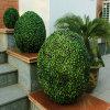 L'alta qualità verde della parete mura la barriera artificiale della stuoia della sfera