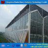 Casa verde agricultural de vidro de camada dobro para o tomate