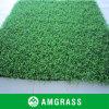 Hierba de la fibra y césped artificial con la clase internacional (AC212PA)