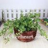 도매 OEM Handmade 길쌈된 포도 수확 고리 버들 세공 버드나무 등나무 화분 재배자 Ga0012