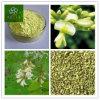 Extrato do Rutin, extrato de Japonica do Sophora, extrato da flor de Japonica do Sophora