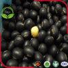 黒い大豆の黒の大豆の黄色のカーネル