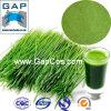 polvo del jugo de la hierba de cebada de 100-200mesh Natrual