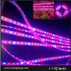 CC 12V 5050 60LED/M LED Grow Lighting/Plant Light Spectrum