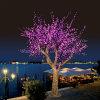 LEDの桜ライト