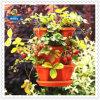 China Factory Hanging Basket für Indoor Herb/Strawberry Planter