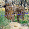 Engranzamento da corda de fio do aço inoxidável para animais do jardim zoológico