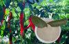 Pflanzenquellaminosäure-lösliche Puder-Aminosäure