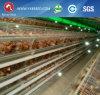 Strumentazione del pollame della batteria dell'azienda agricola per mettere a strati pollo