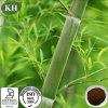 Extracto de bambú de la hoja del cuidado médico natural de los dientes