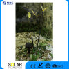 3 indicatori luminosi ottici solari decorativi della fibra del giardino dell'ape del LED, fabbricazione in Cina