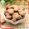 Feijões largos secos/feijões de Fava