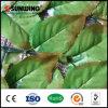 La barriera di plastica artificiale ecologica decorativa lascia il comitato con il Ce dello SGS