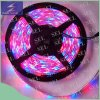 DC12V SMD2835 RGB colorea la luz de tira flexible del LED