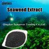 Выдержка Seaweed удобрения Orhanic для овоща