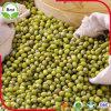 Entgiftung! ! Qualitäts-grüne Mungobohne