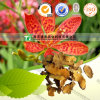 Natural Herbal Medicine Raw Material Blackberry Lily