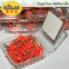 Fruta chinesa orgânica da ETB Goji Wolfberry da nêspera