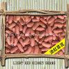 中国の赤い腎臓豆の普通サイズ