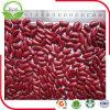 Obscuridade nova da colheita 2016 - feijões-roxos vermelhos
