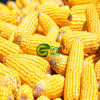 Crop novo de IQF Frozen Sweet Corn Vegetables