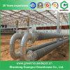 Système de chauffage de serre chaude par Boiler, tube d'eau chaude et ventilateurs