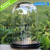 明確なガラス鐘のガラスドームは卸し売りする