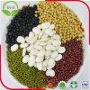 Grãos de soja do GMO do baixo preço não