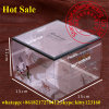 China-Kuchen-Paket-Raum-Haustier-Plastikgeschenk-Kasten-Lieferanten
