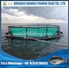アフリカの栽培漁業の熱い販売のためのHDPEの浮遊純ケージ
