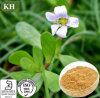 Suplemento para saúde do cérebro Bacopa Monnieri Extract Bacoside 20%, 50% HPLC