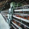 тип автоматическая конструкция клетки цыпленка для фермы слоя (A4L120)
