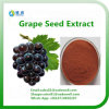 OPC vendedor caliente el 95% del extracto del germen de la uva