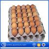 Mercancías superventas de la fuente de China Qunkun Company de la bandeja y de la incubadora del huevo en venta