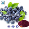 Água de 100% - Natural solúvel Bilberry Juice Powder
