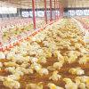 Casa de pollo prefabricada del bajo costo con el equipo del sistema completo
