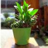 Fibra de vidro Flowerpots & Planter para Home & jardim Decor