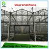 زراعة دفيئة قابل للنفخ زجاجيّة