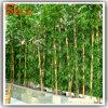 Plantas de bambú artificiales verdes casi naturales del árbol de seda de la tela