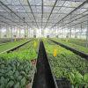 Multi serra di plastica protettiva a buon mercato UV della portata