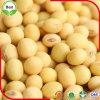 2016 neues Getreide getrocknete gelbe Sojabohnenöl-Bohnen