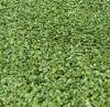 Short Yarn (CPT-10PP)를 가진 틀린 Lawn