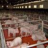 돼지 새끼를 낳는 펜 Piglet 보존 침대