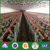 Vertiente del pollo de la estructura de acero del surtidor de China