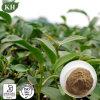 [أولونغ] شاي مقتطف [فولفنولس] 20%-80%