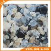 Tegel van de Vloer van de Rustieke Shell van de badkamers Vorm van Porcellanato de Ceramische